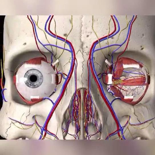眼眶甲状腺相关眼病眼眶减压